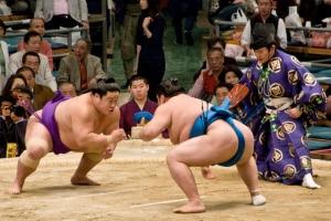 Sumo Nhật Bản rất béo nhưng lại ít khi mắc các vấn đề về sức khỏe: Lí do từ đâu?